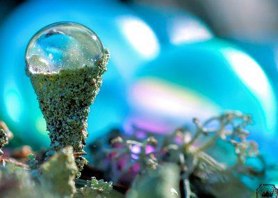 Cerulean Sparkles