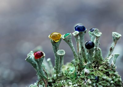 Lichen My Rainbow