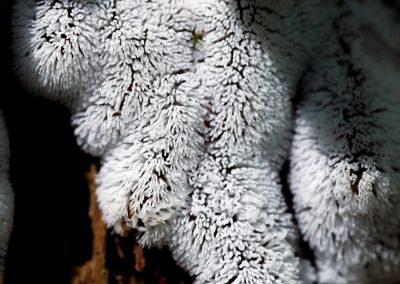 Polar Fur