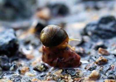 Snail Island