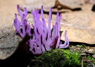 Violet fingers